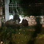 Abruzzo, inseguono mamma orsa e 4 cuccioli per fare i video: animali terrorizzati, ira social
