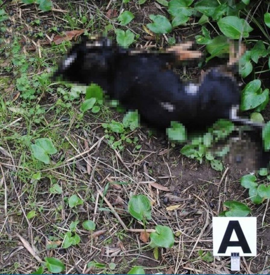 Velletri, spara a un cane che gli stava uccidendo le galline: denunciato