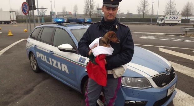 Cagnolino lanciato in autostrada da una BMW con targa rumena