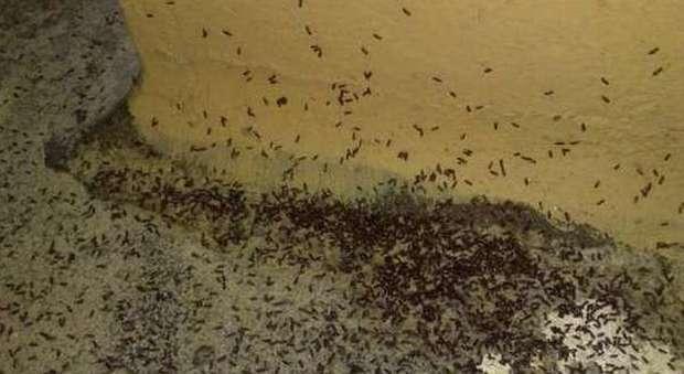 Albergo choc infestato dalle cimici dei letti parassiti in tutte le stanze chiuso italia - Prurito diffuso a letto ...