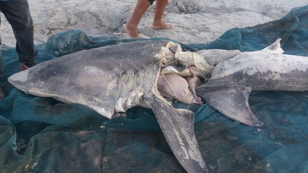 Le orche attaccano e uccidono due squali bianchi: due super