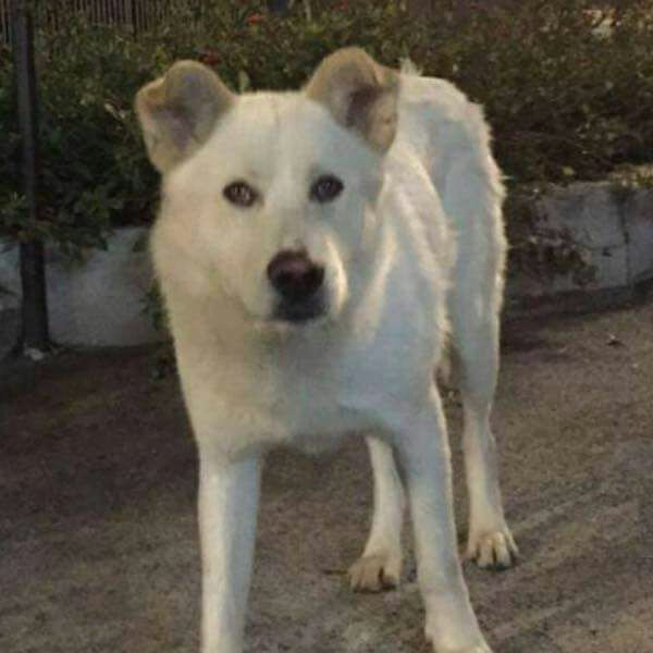 Cane torturato e ucciso, in quattro condannati a 16 mesi di reclusione