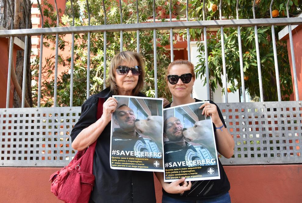 Danimarca: il cane Iceberg è salvo, presto tornerà in Italia