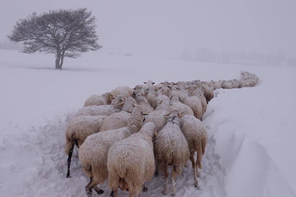 Coldiretti, è allarme meteo come nel 1985
