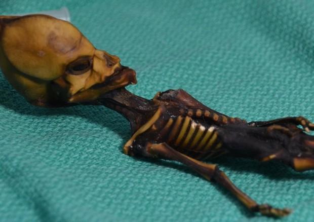 Cile : Il mistero dello scheletro alieno ritrovato nel deserto di Atacama