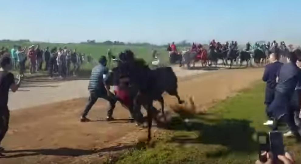 Cavallo travolge e uccide spettatore durante'Cavalcata buoi'