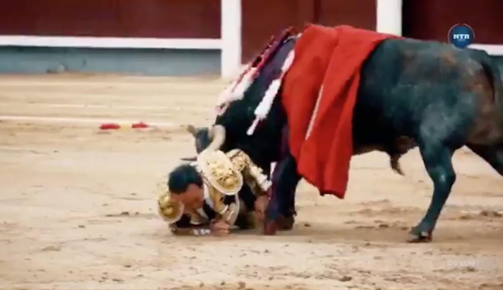 Torero incornato dal toro alla feria di Madrid: «Colpito a una gamba, è grave»
