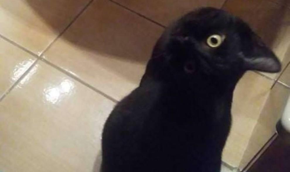 bagnato nero pussi