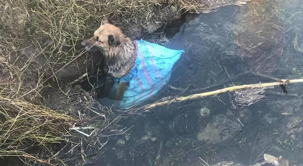 Cane legato e gettato in un sacco nel canale, i vigili del fuoco lo salvano in extremis