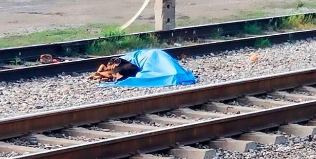 Il padrone viene investito da un treno, il cagnolino resta accanto a lui per ore a vegliarlo