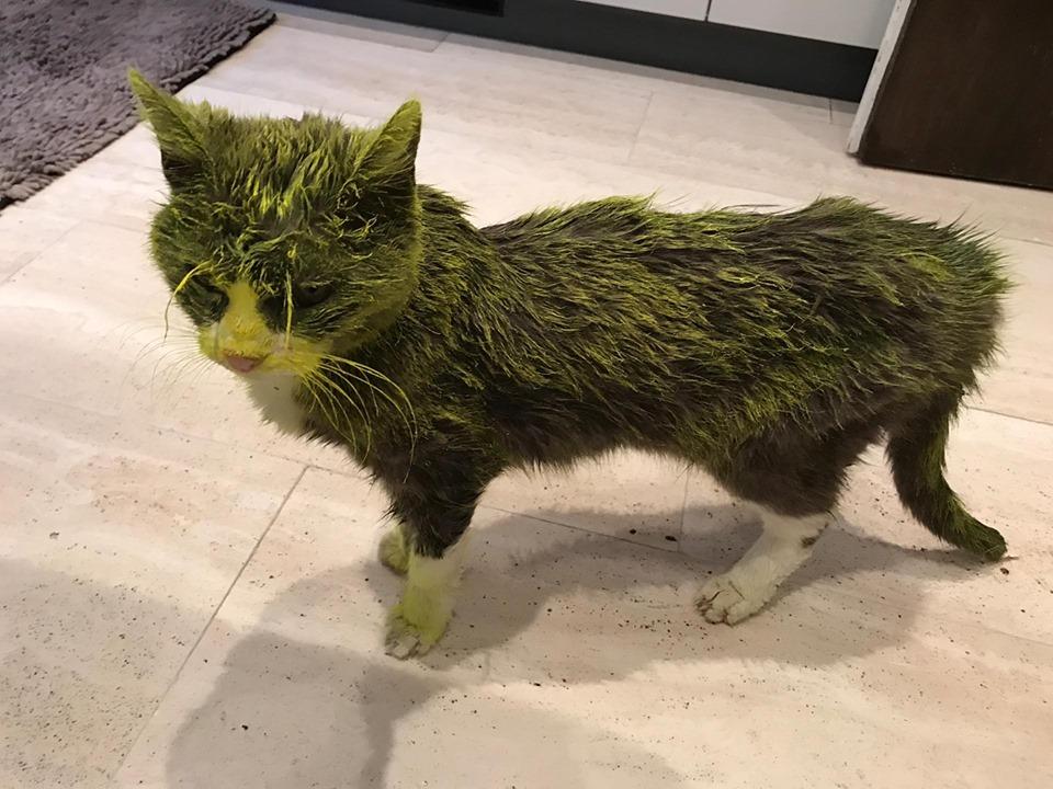 Vicino Di Casa Spruzza Vernice Sul Gatto Il Micio Di 13 Anni Muore