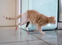 Vito, il gatto bionico: due protesi alle zampe posteriori, è star dei social